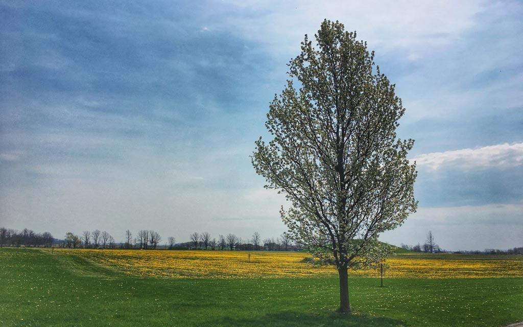 Archbold Wilson Adopt-a-Tree