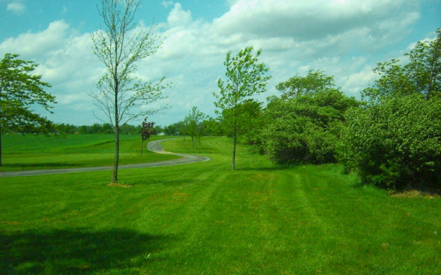 Archbold Wilson Walking Trail & Trees
